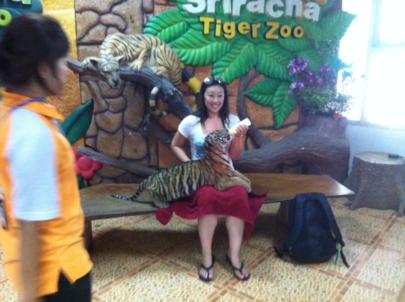 Feeding a baby tiger, CHECK!
